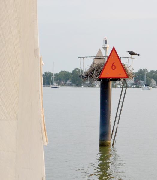 sid and sail