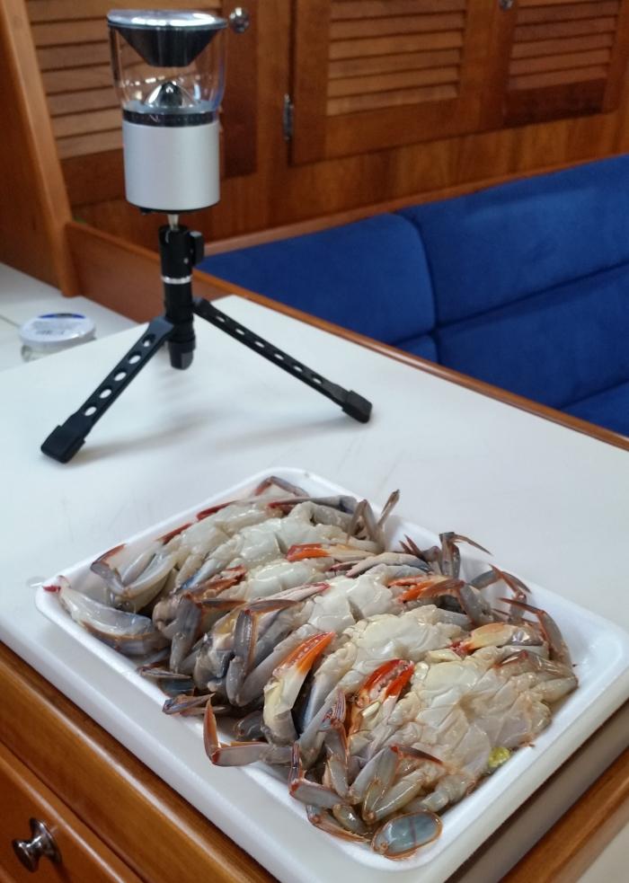 crabs and camera